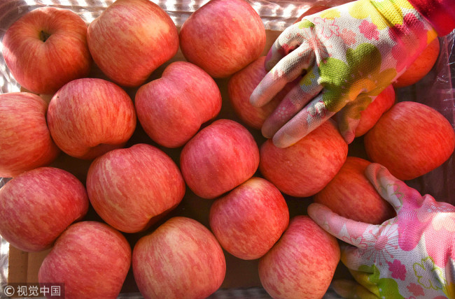 Data shows China had 2 million hectares of apple trees with an output of 43.88 million tons in 2016, accounting for 57 percent of global supply. [File Photo: VCG]