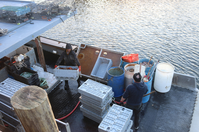 Lobsterman Anthony Kleiner (left) unloads lobsters from his boat in a port near Portsmouth, New Hampshire in December 2018. [Photo: China Plus/Liu Kun]