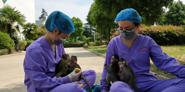 Staff members feed cloned monkeys with circadian rhythm disorders. [Photo: China Plus]