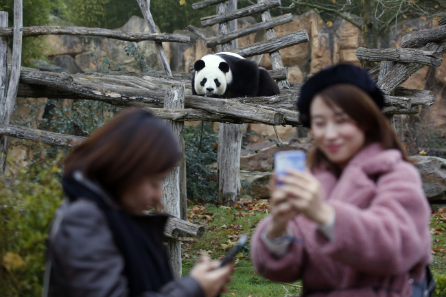 Tourists make selfies with panda Yuan Zi at the zoo, in Saint-Aignan-sur-Cher, France, Monday, December 4, 2017. [Photo: AP/Thibault Camus]