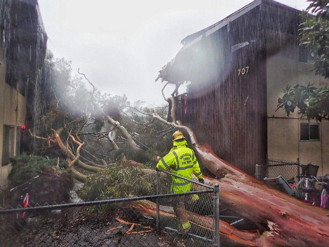 In this Saturday, Feb. 2, 2019, photo released by Santa Barbara County Fire, Santa Barbara County firefighters survey the scene of a large eucalyptus tree that fell into a two-story apartment complex on Bolton Walk in Goleta, Calif. Multiple trees have toppled and wires have come down throughout the county as a result of this latest storm. A wind gust in Santa Barbara County topped 80 mph (128 kph) as the storm moved south and later dropped more than a half-inch (1.27 centimeters) of rain in five minutes. [Photo: AP]