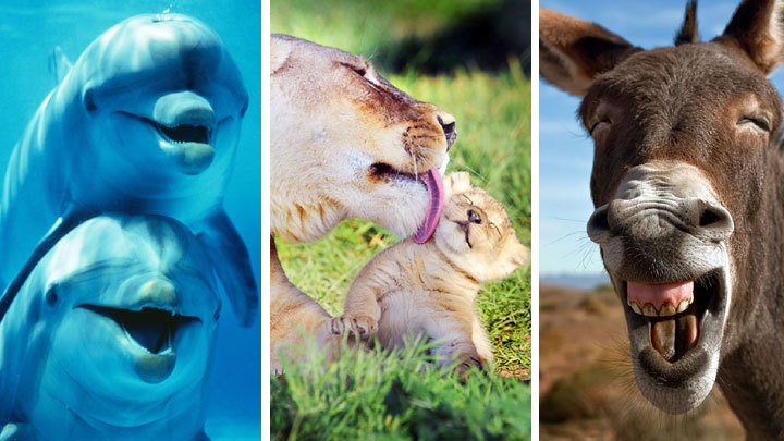 Happy faces of animals on International Day of Happiness