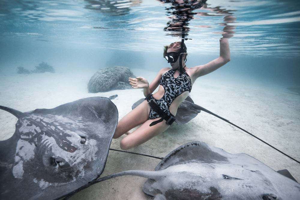 Free-diver pictured playing with sharks and sting rays near