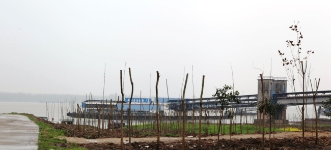 Saplings have been planted in a wharf area of Anqing along the Yangtze River. [Photo: Chinaplus]