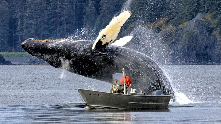 Stunning photo shows whale jumping over fisherman