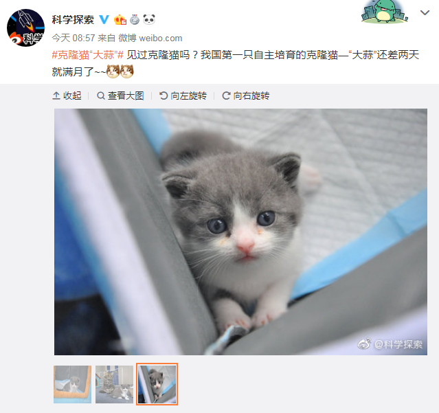 A photo of China's first cloned cat, a kitten named Garlic, shared on Sina Weibo by Scientific Exploration. [Screenshot: China Plus]