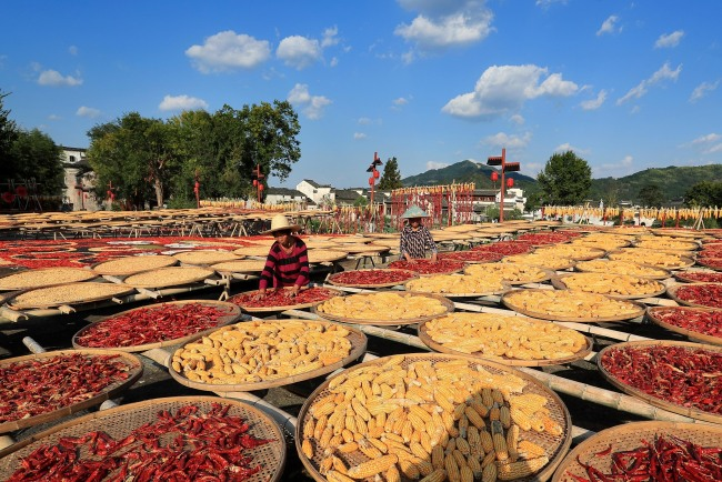 Colorful crops are spread out at a sunning ground in Chengkan ancient village, Huangshan city in East China's Anhui province, on Sept 22, 2019. [Photo: VCG]