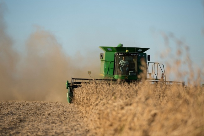 Soybeans being harvested with a mechanical combine September 23, 2013 in Iowa, United States of America. [File Photo: IC]