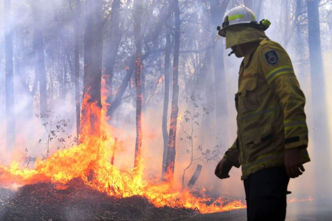 A firefighter works as a bushfire, believed to have been sparked by a lightning strike that has ravaged an area of over 2,000 hectares in northern New South Wales state, burns in Port Macquarie on November 2, 2019. Hundreds of koalas are feared to have burned to death in an out-of-control bushfire on Australia's east coast, wildlife authorities said October 30. [Photo: VCG]